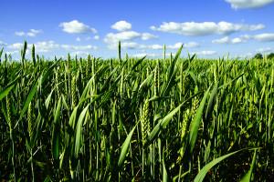 Monsanto-foto-2