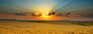 Summer-evening-Cornfield-851x315