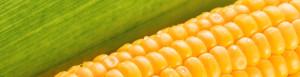 agrocoltura-header