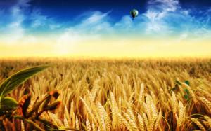 cornfield-hd-wallpaper-desktop