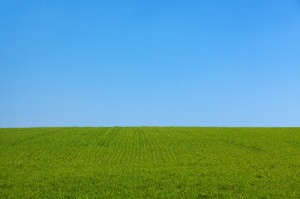 grass_and_the_sky_background_195809