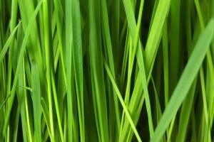 grass_background_188723