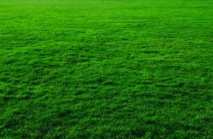 grass_background_201062-e1432037289751